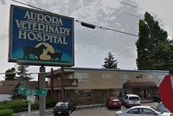 vet in seattle